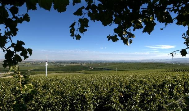 Seven Hills Vineyard - lecole merlot