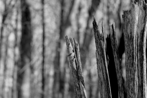 deadwood#2