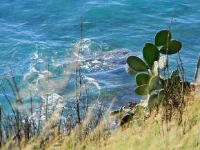 blue & green by Susie SweetlandGaray