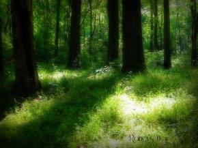 Mystical Forest by RaineyHeath