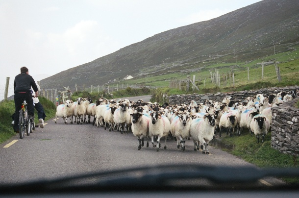 Traffic jam 3 (2)