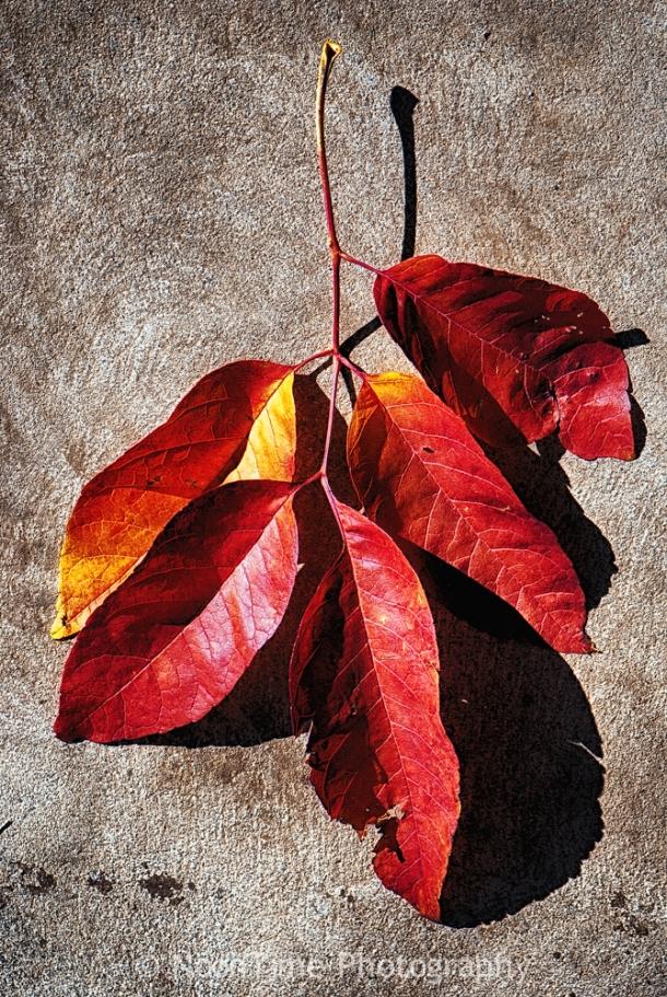 autumn_leaf_1