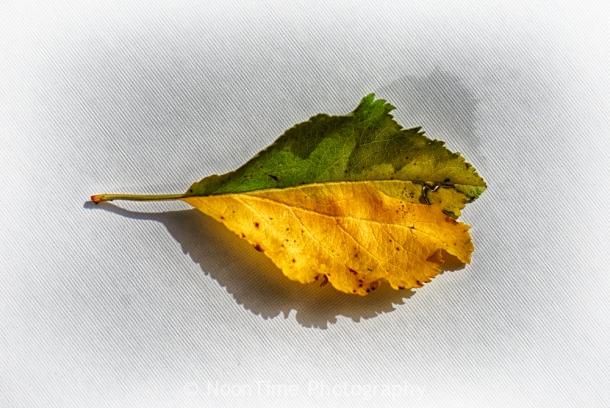 autumn_leaf_2