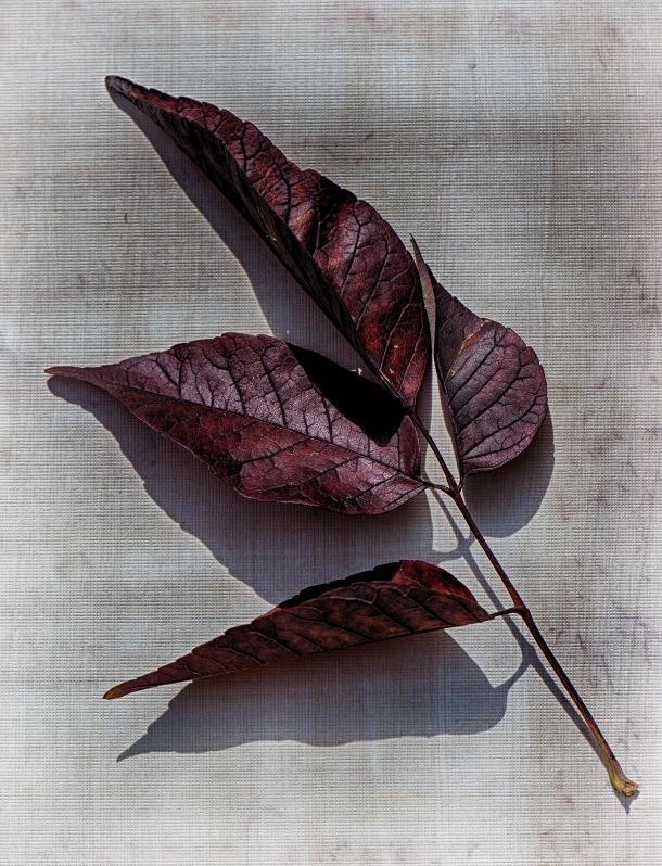 autumn_leaf_3